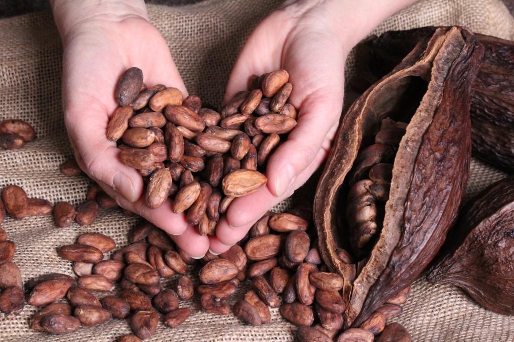 Kakaobönor 2 webb miljöbild